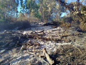 De verwoesting na een brand